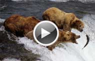 Alaska Cruise destinations